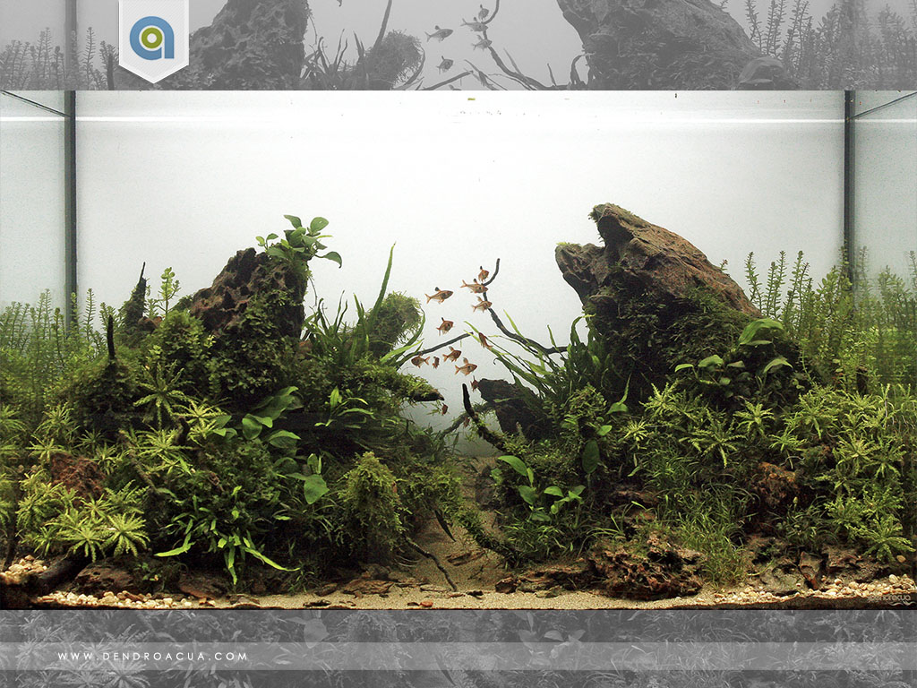 gormaz paisaje acuatico