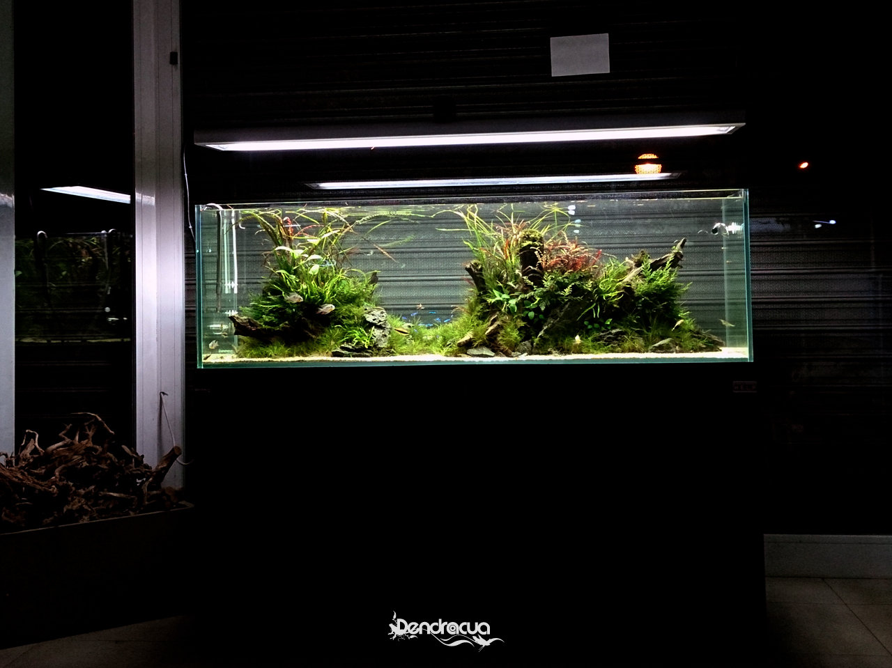 treze nature aquarium by dendroacua 4