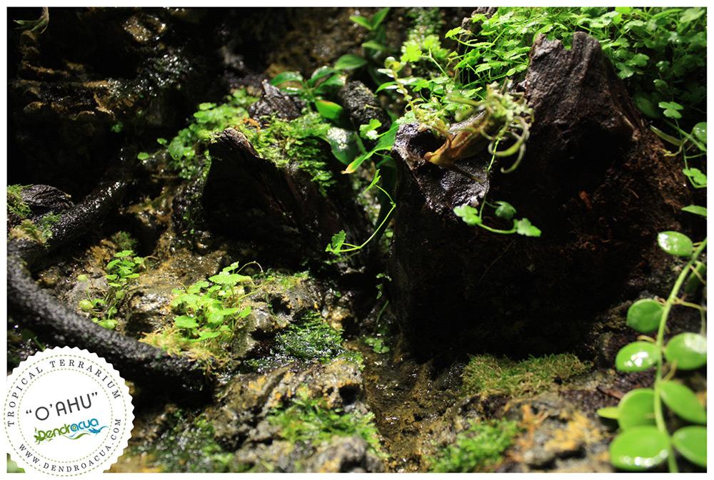terrario-a-medida-dendroacua-zaragoza-dendrobates-vivario-4
