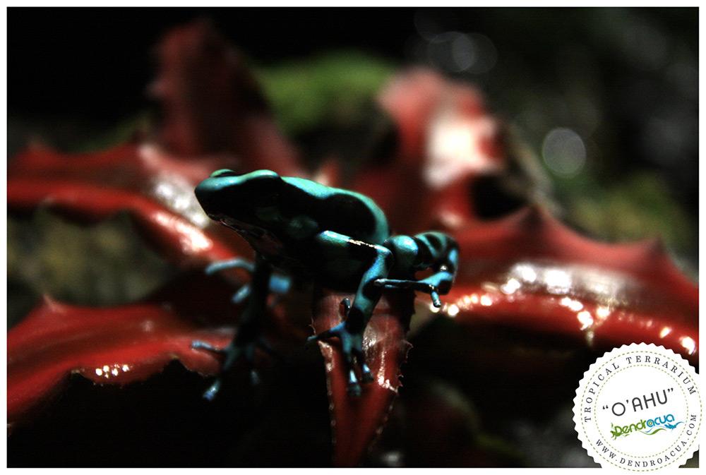 terrario-a-medida-dendroacua-zaragoza-dendrobates-vivario-6
