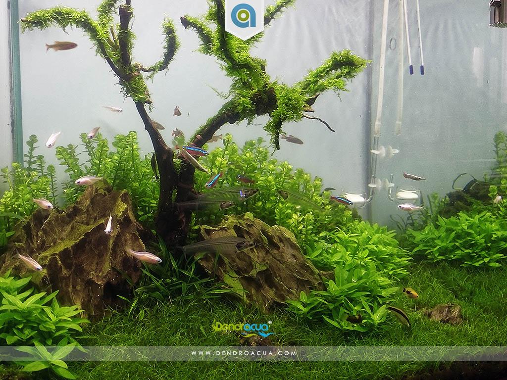 Paisaje acuatico de Yolanda 3