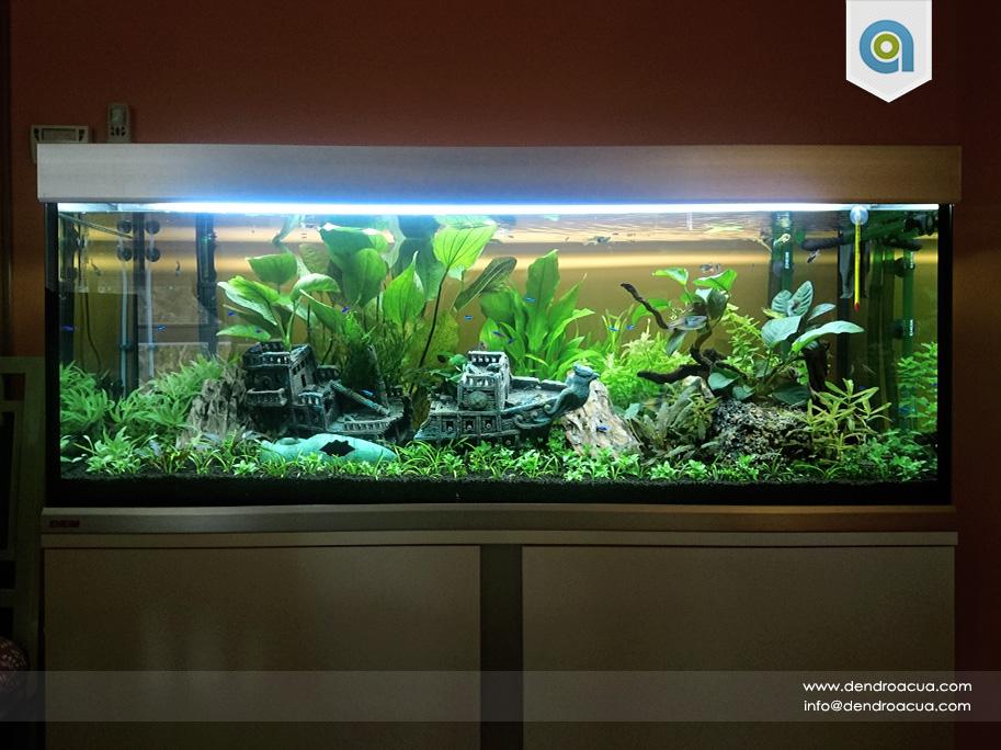 acuario paco 3
