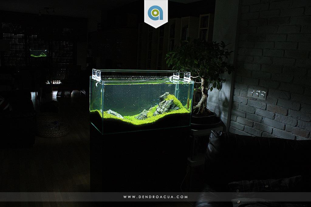paisajismo acuatico iwagumi zaragoza dendroacua 2