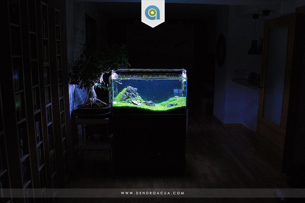 paisajismo acuatico iwagumi zaragoza dendroacua 3