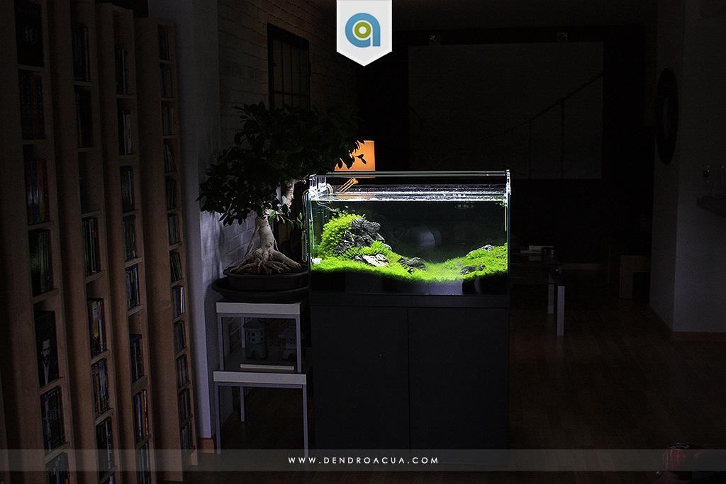 paisajismo acuatico iwagumi zaragoza dendroacua