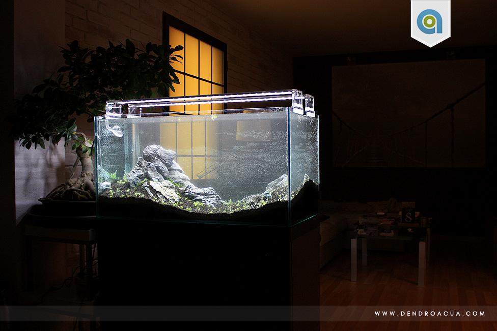 paisajismo acuatico iwagumi zaragoza6