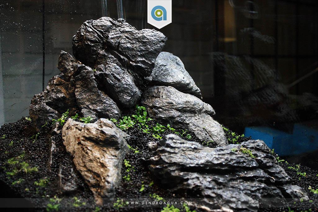 paisajismo acuatico iwagumi zaragoza9