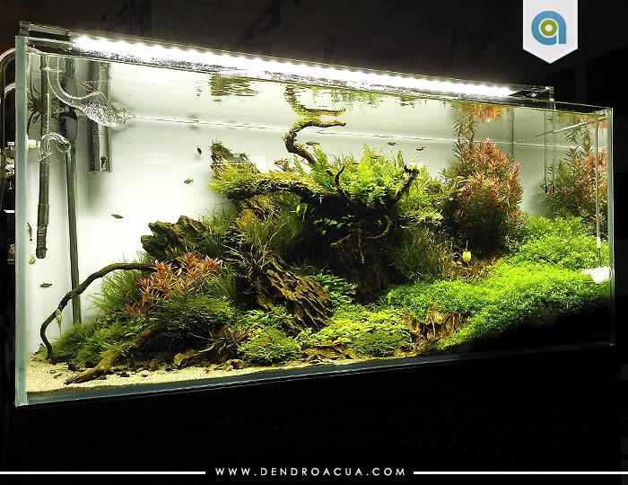 tienda acuarios zaragoza Acuario de plantas noname 2 dendroacua