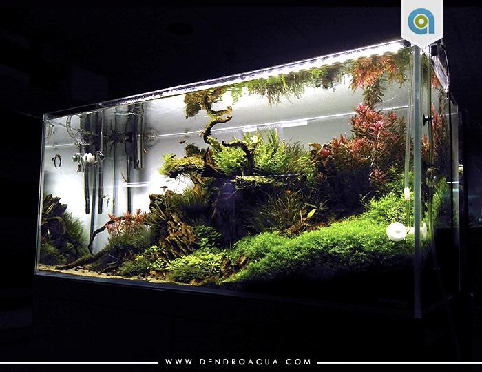 tienda acuarios zaragoza Acuario de plantas noname 3 dendroacua