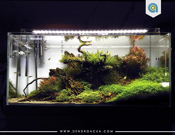 tienda acuarios zaragoza Acuario de plantas noname 4 dendroacua