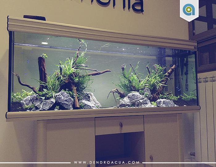Armon a dendroacua acuarios terrarios jardines - Montaje de acuarios ...