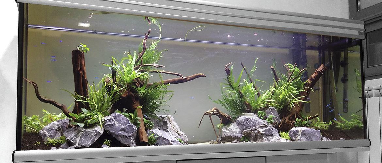 Instalaci n de acuario armon a dendroacua acuarios for Instalacion de jardines verticales