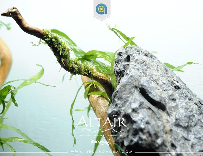 Montaje acuario a domicilio Dendroacua altair 12