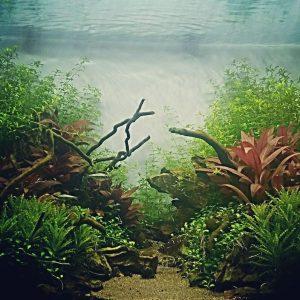 Instalacion de acuario a domicilio Pasados 4 meses desde suhellip