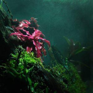Natur Color! Que os parece el color de nuestras Cryptanthushellip