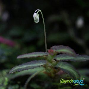 Begonia en Flor Compartimos con vosotros la foto de estahellip